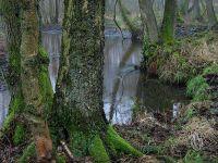Bruchwald im NSG Kleine Örtze