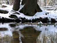 Winterufer im Spiegel des Weesener Baches