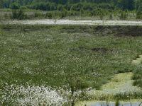 Schweimker Moor