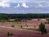 Heideflächen am Hausselberg
